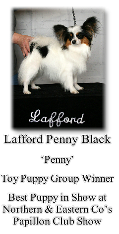 Lafford Penny Black 'Penny' Toy Puppy Group Winner Best Puppy in Show at Northern & Eastern Co's Papillon Club Show